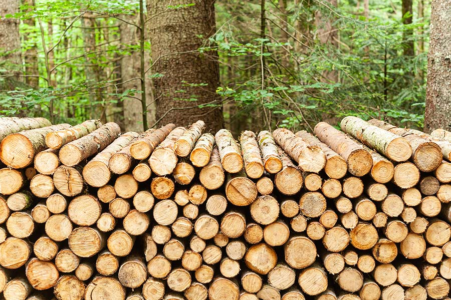 logs piled up
